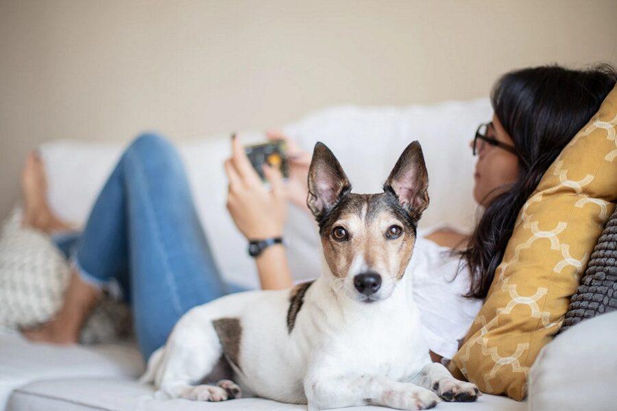 ragazza e cane sul letto