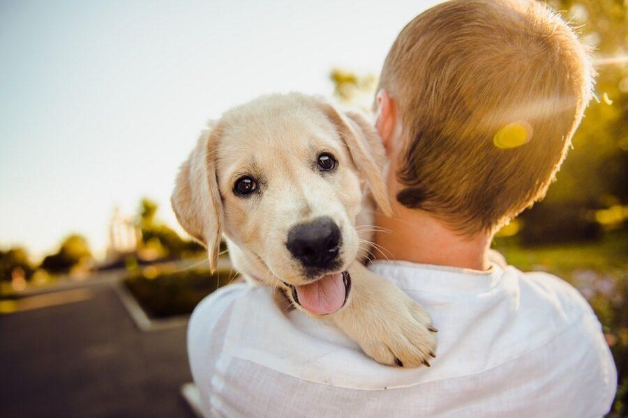 cane fra le braccia di un ragazzo