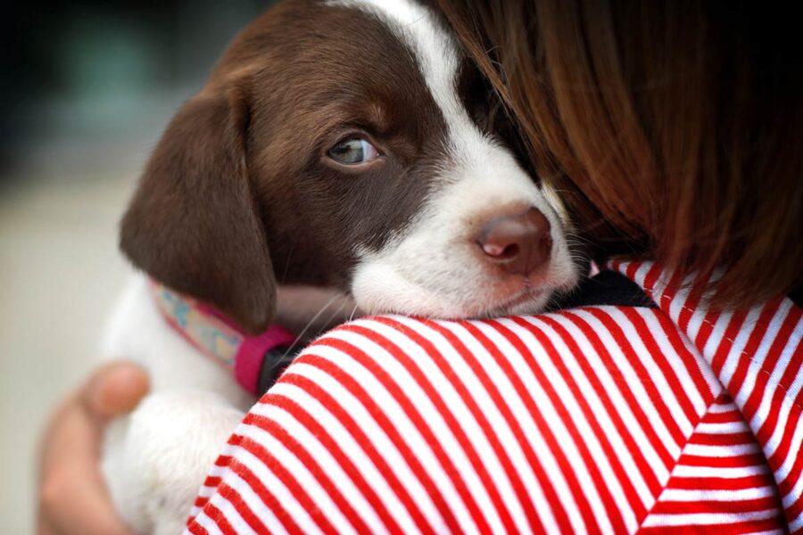 cane abbracciato dalla padrona