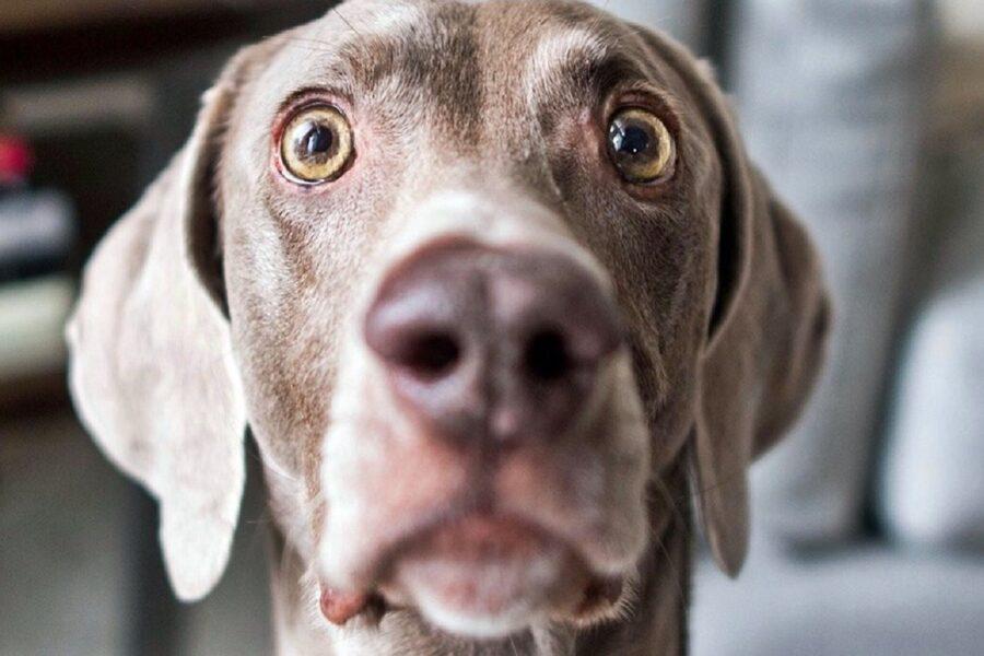 cane con occhi spalancati