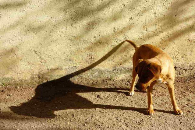 cane ha paura della sua ombra