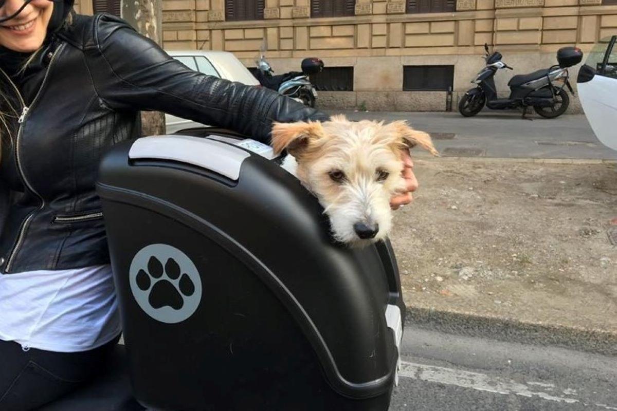 cucciolo di cane sul bauletto della moto