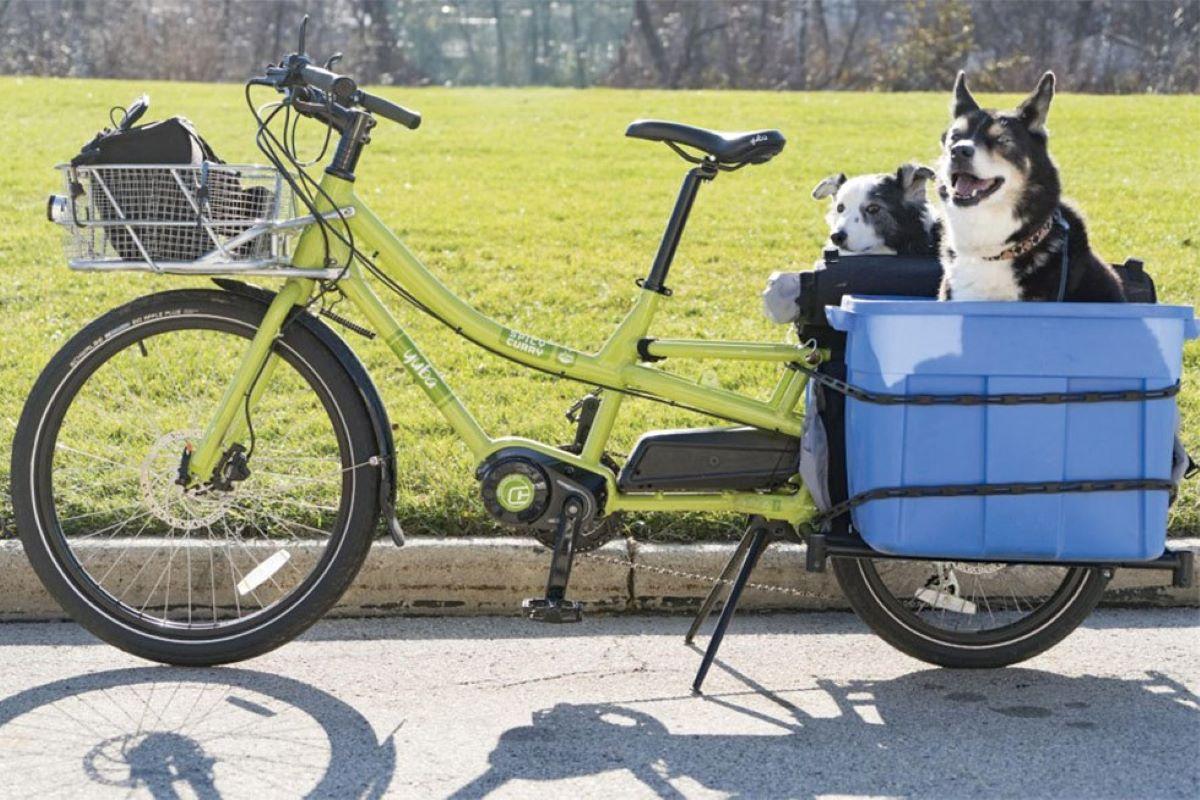cani sulla bicicletta
