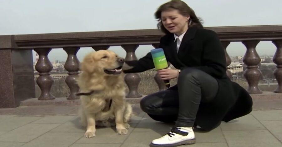 Martin, un cucciolo di Golden Retriever, toglie il microfono a una giornalista durante una trasmissione dal vivo (VIDEO)