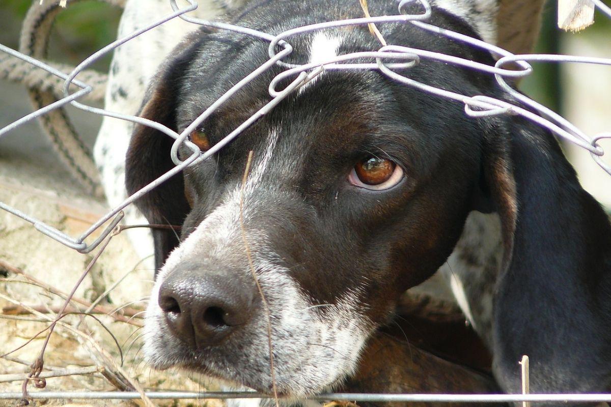cane con la testa sotto ad una rete