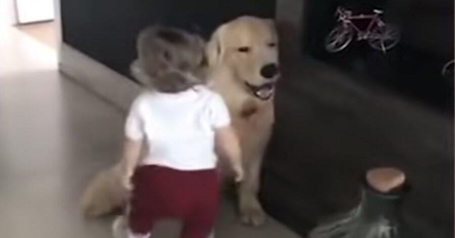 bimba saluta Toddler