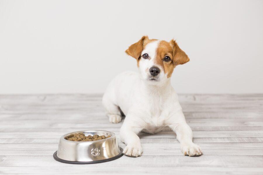 cucciolo di cane accanto alla cuccia
