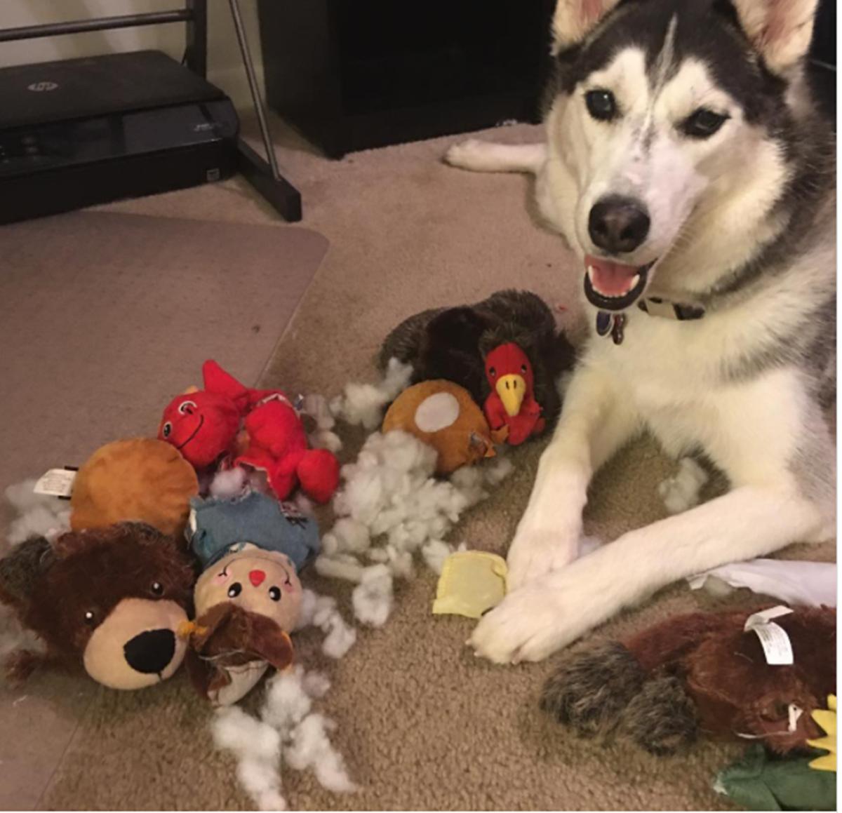 cane con giocattoli