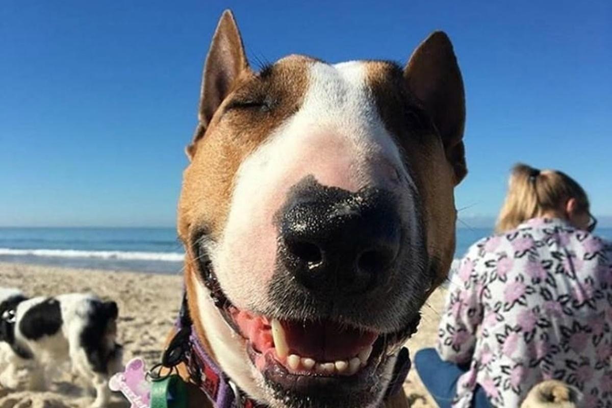 cane che sorride in spiaggia