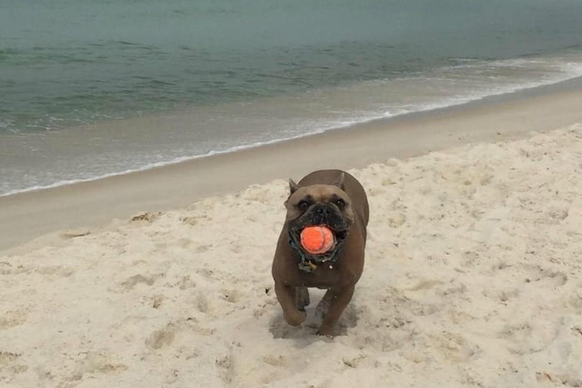 cani da spiaggia- cane che riporta pallina