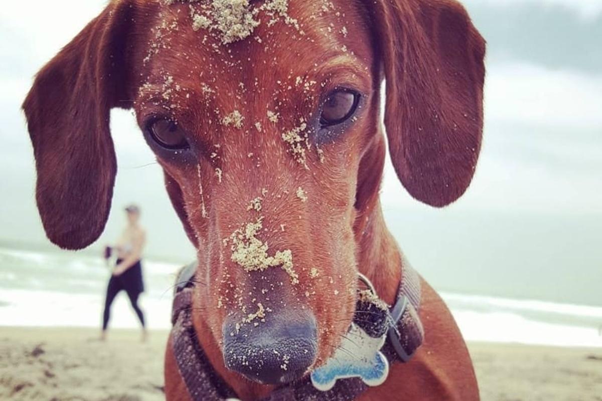 cani da spiaggia-cane sporco di sabbia