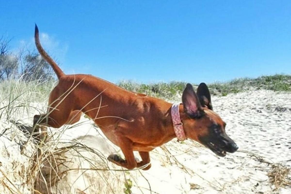 cane che corre in mare