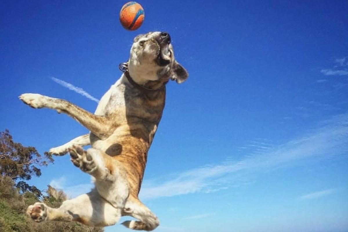 cane che salta su pallina