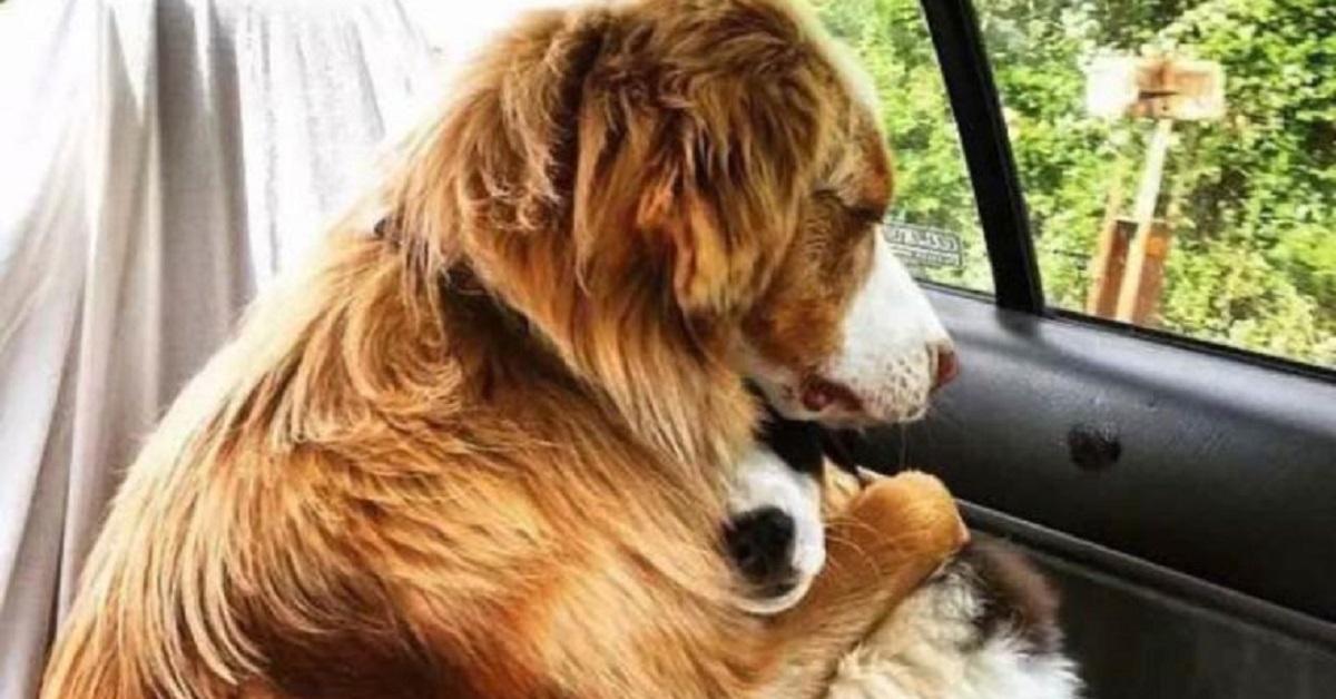 cani dal veterinario-abbraccio tra cagnolini