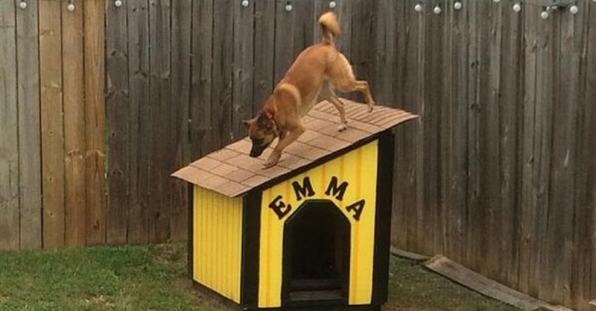 """Cani e cucce: 10 cani che preferiscono stare """"sulla"""" cuccia e non """"nella"""" cuccia"""
