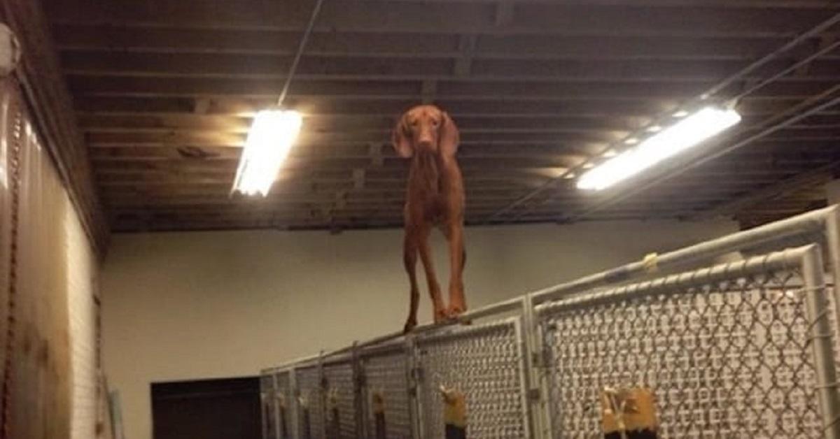 cane sulla rete