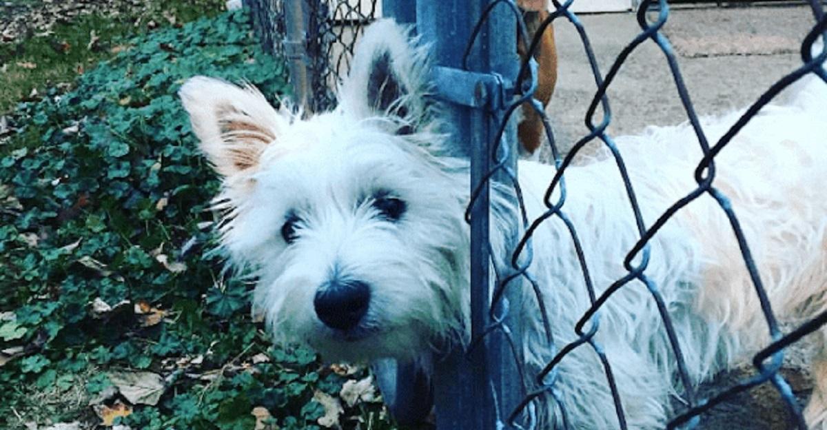 cani e guai-recinzione