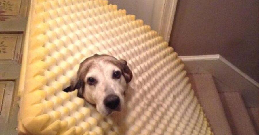 cane nella spugna