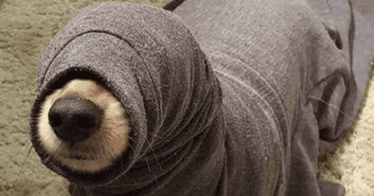 cani e guai-maglione