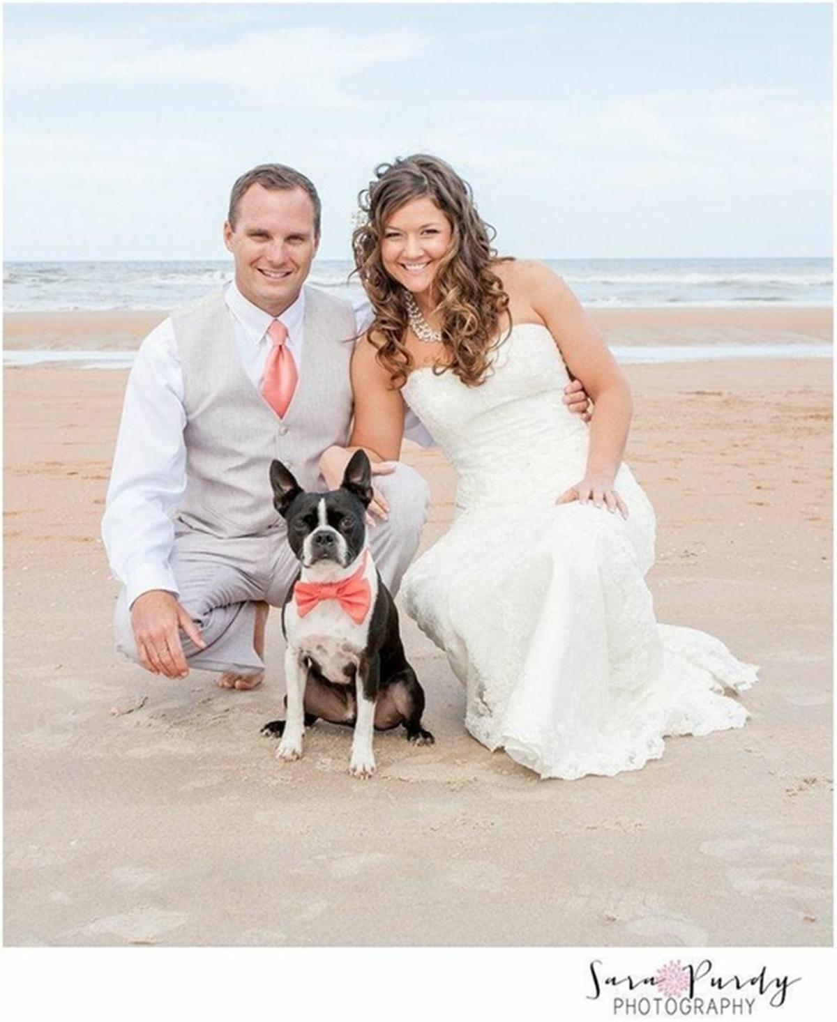 cane con sposi sulla spiaggia