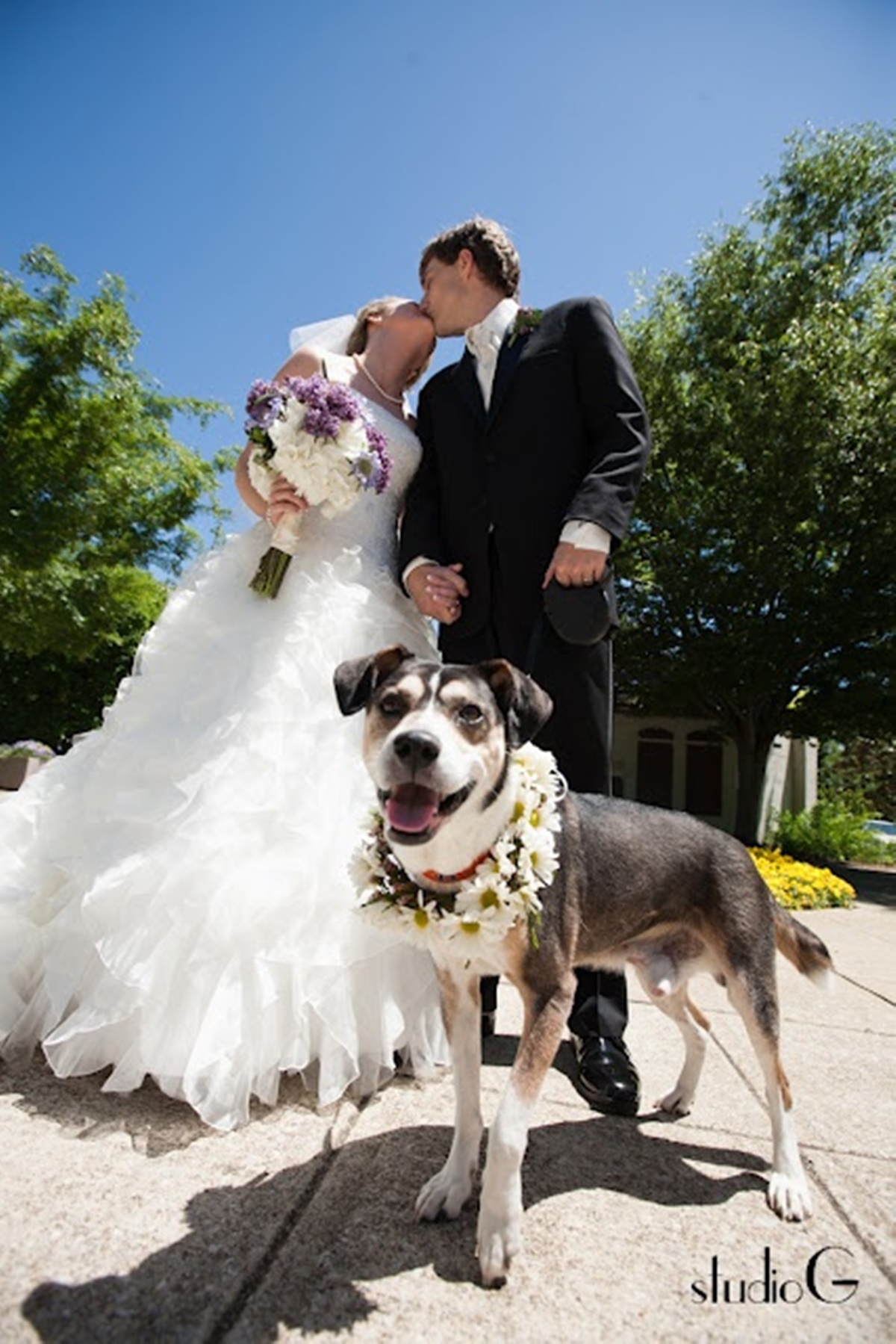 cani e matrimoni-cane che ride