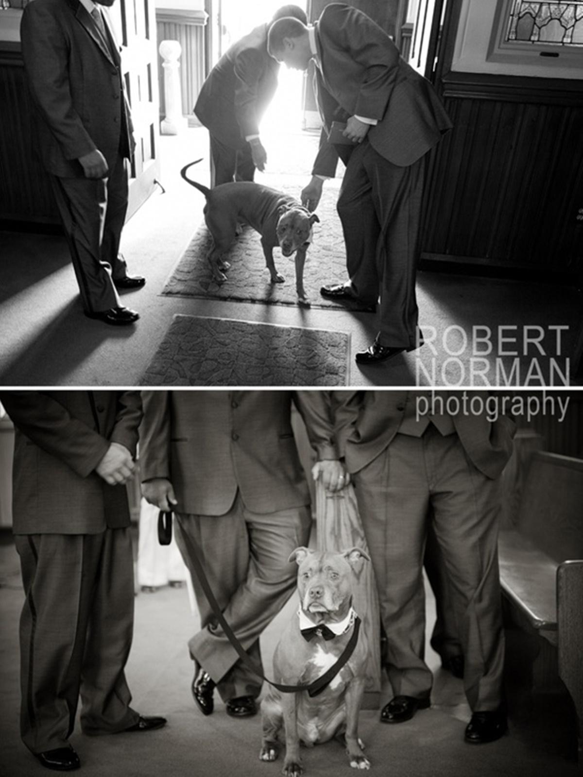 cani e matrimoni-riunione tra gentleman