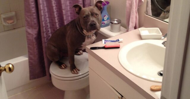 cani in bagno-oggi niente bisogni