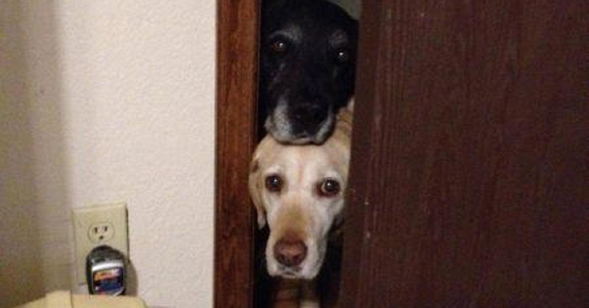 cani in bagno-coppia supporto