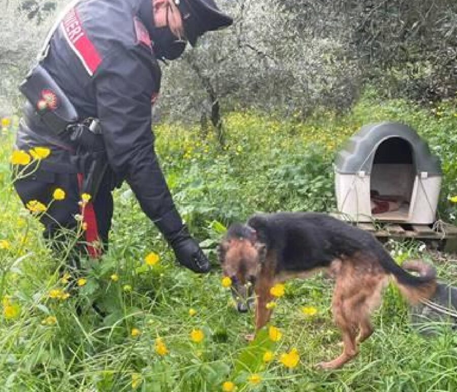 carrara cane athos abbandonato terreno
