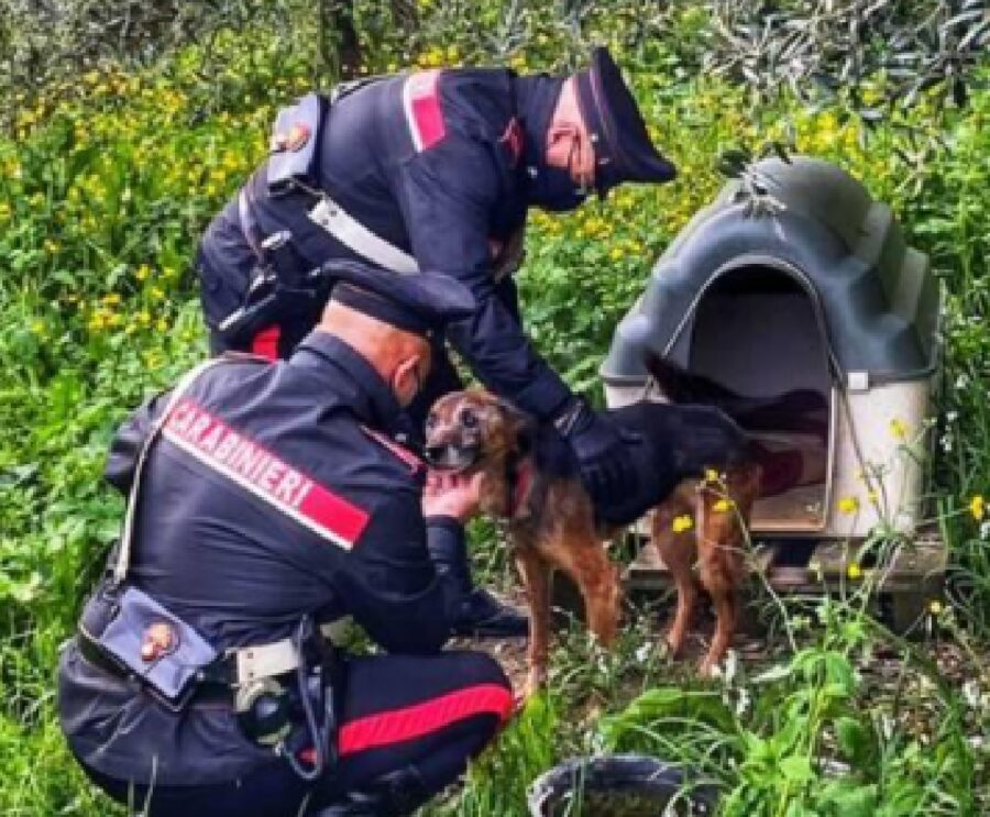 carrara cane athos carabinieri soccorso