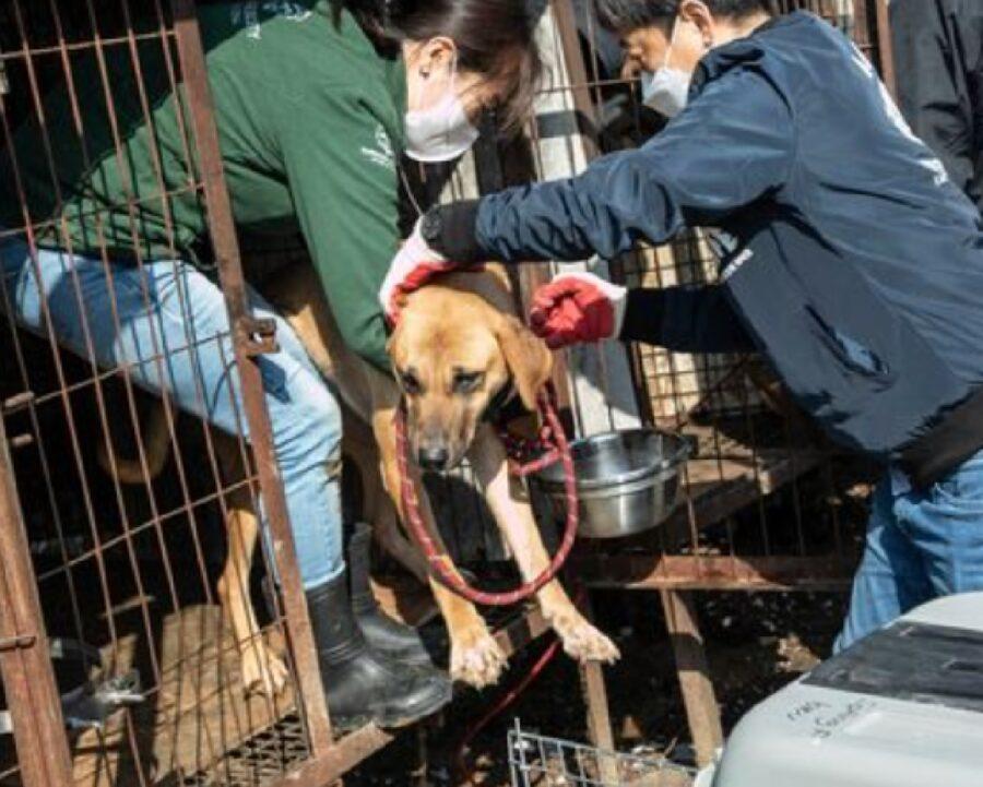 50 cani corea del sud autorità soppressione