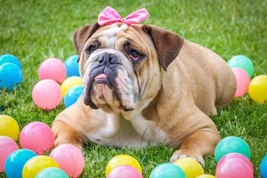 cane tra le palline colorate