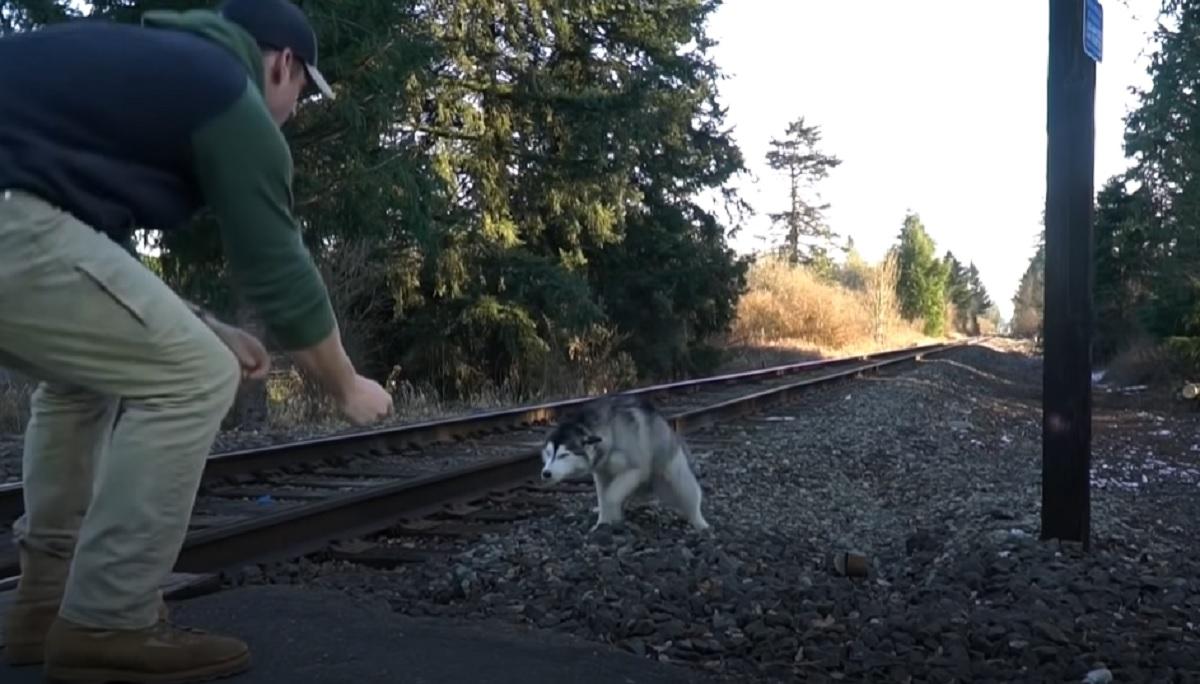 husky binari treno
