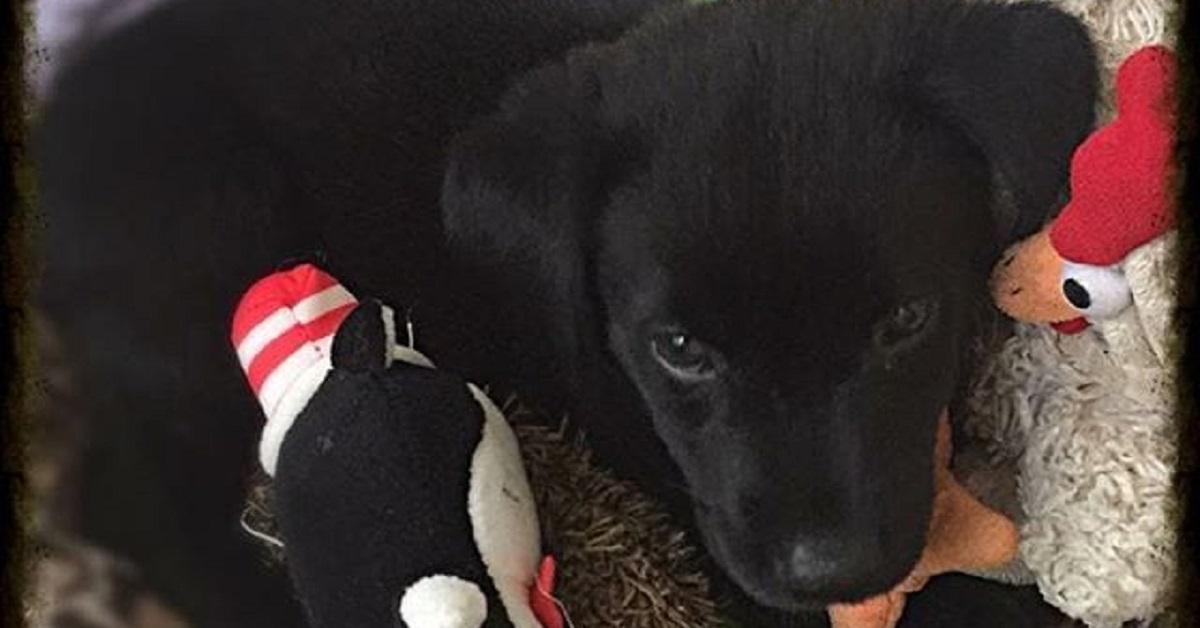 Cuccioli adottati: 10 di loro nel loro primo giorno in casa
