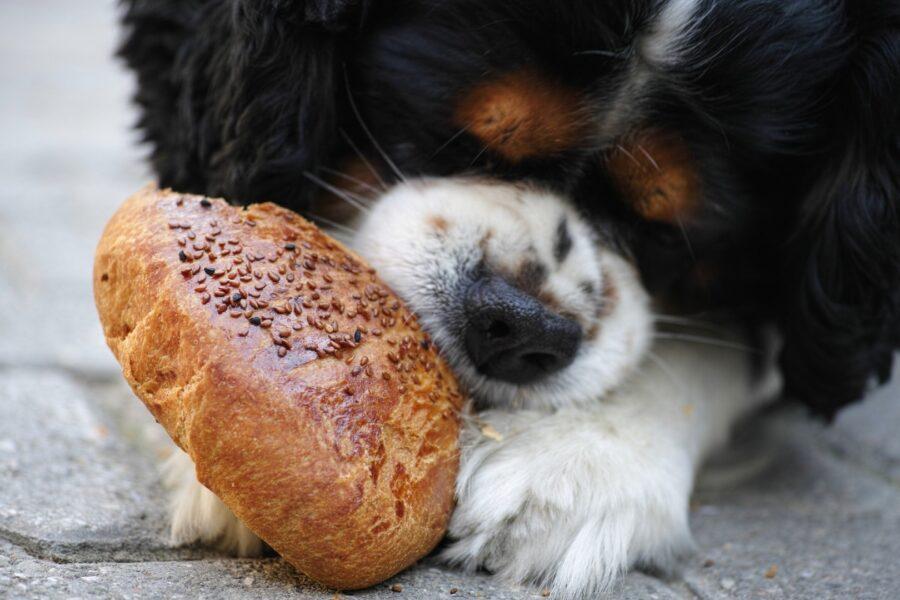 cane con panino