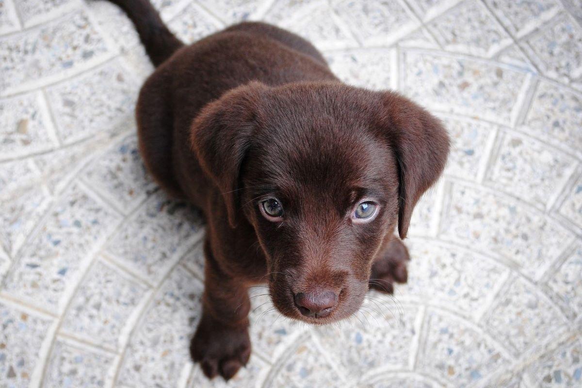 cucciolo con sguardo tenero