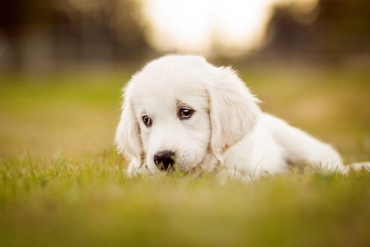 cucciolo di cane ha sempre la coda bassa