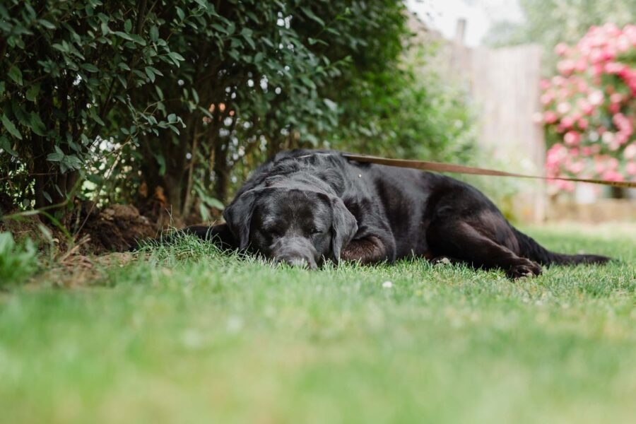cagnolino si rilassa all'aperto