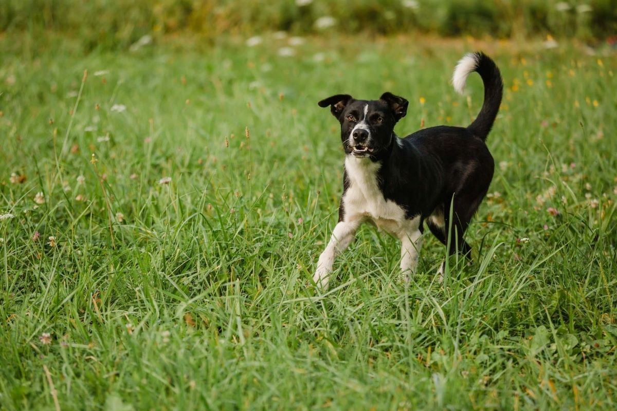 cucciolo di cane insegue le ombre