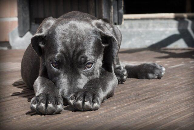 cucciolo di cane non vuole farsi avvicinare
