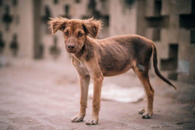 cucciolo di cane randagio come addomesticarlo