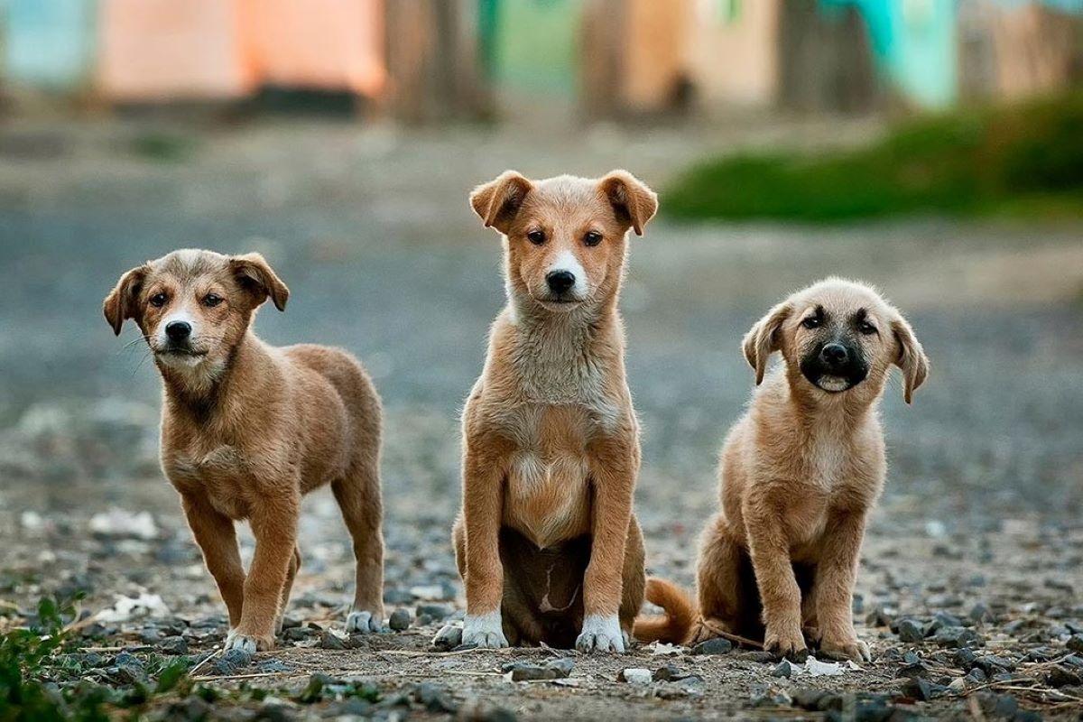 cucciolo di cane come addomesticarlo