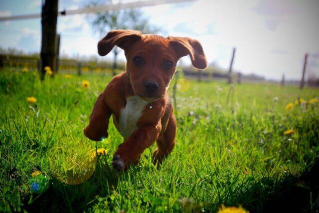 cucciolo di cane tenta sempre di fuggire