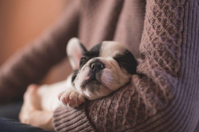 cane dorme tra le braccia