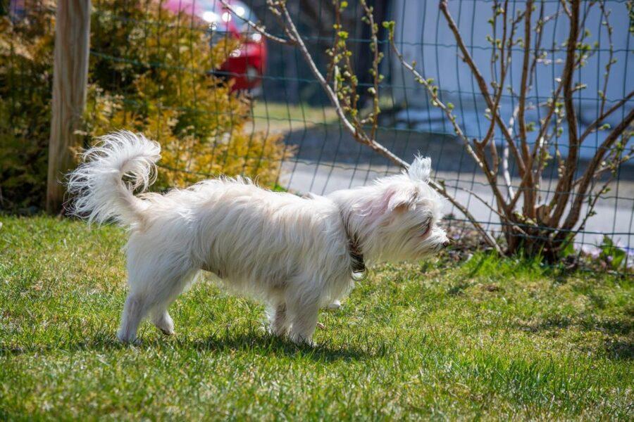 recinzione per il giardino con il cane