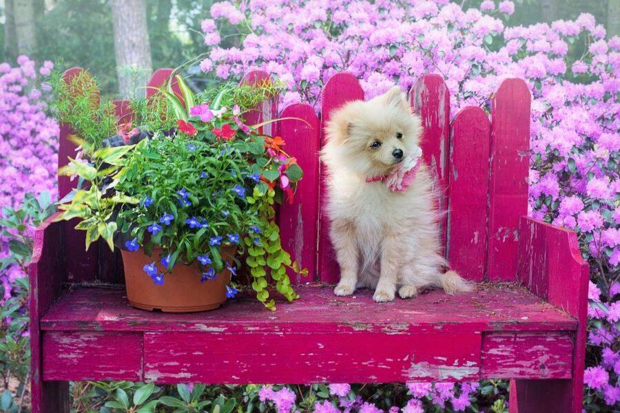 cagnolino su una panchina in giardino