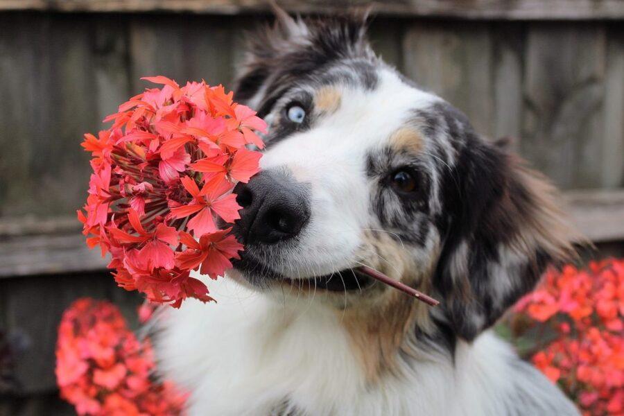cane buffo con fiori in bocca