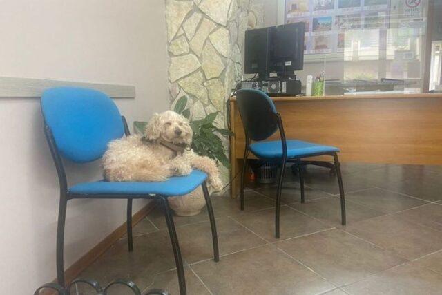 giotto cane esca