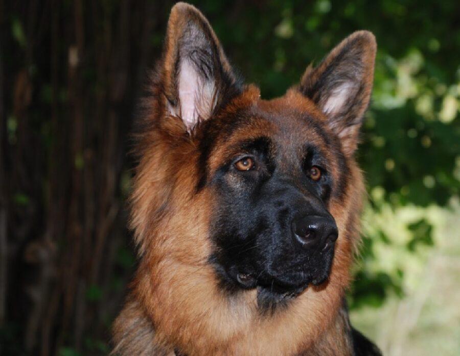 gravina di catania cane forze dell'ordine