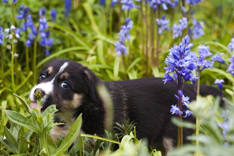 piccolo cane fiori